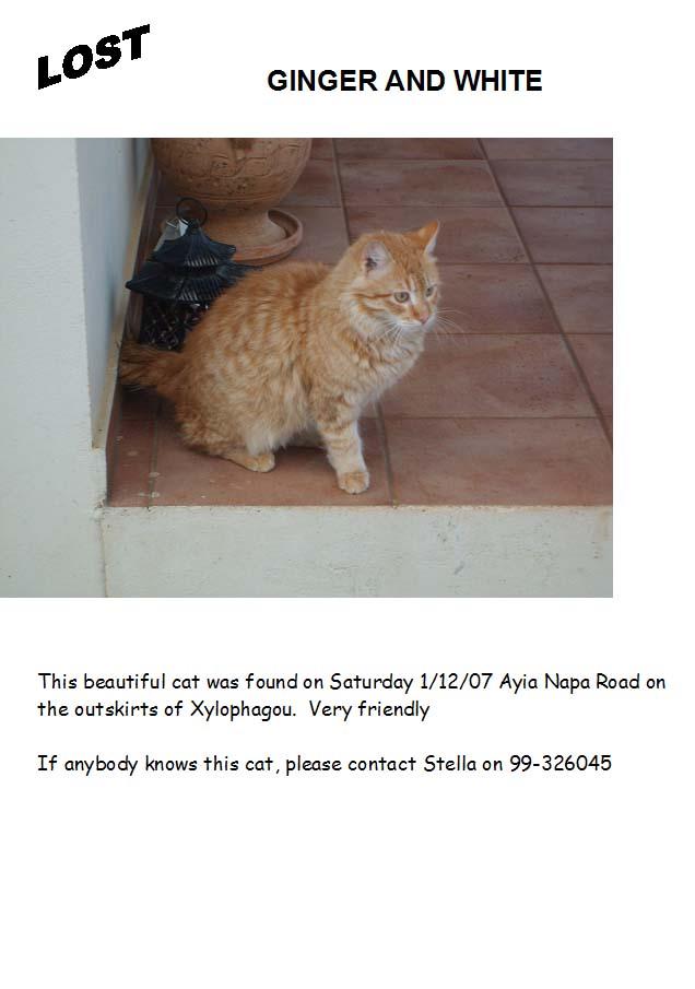 Found Ginger & White Cat Lostca10