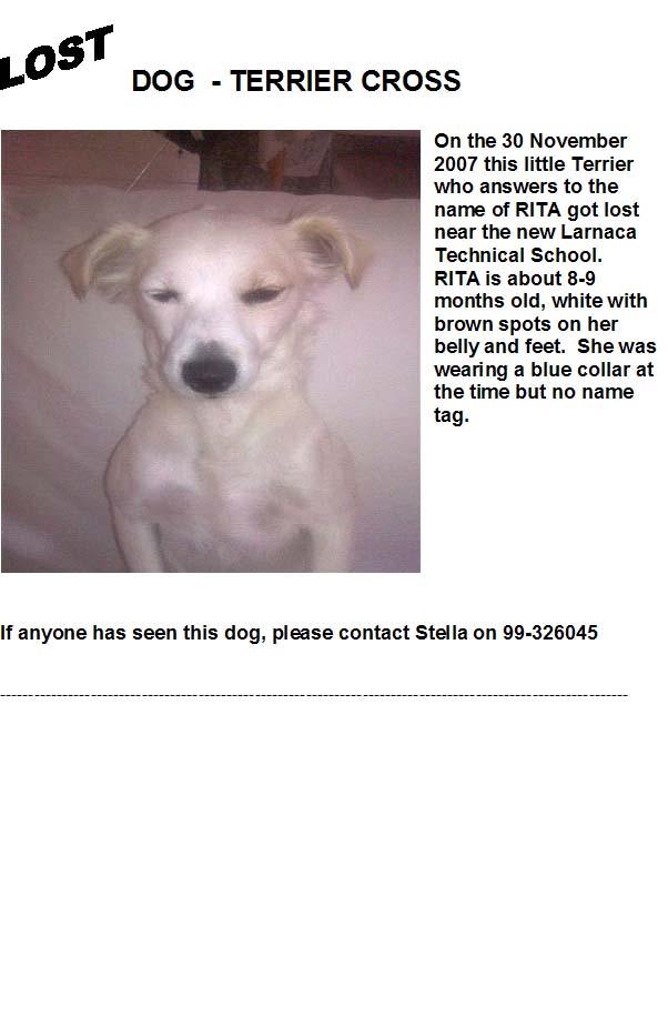Terrier Lost Terrie10