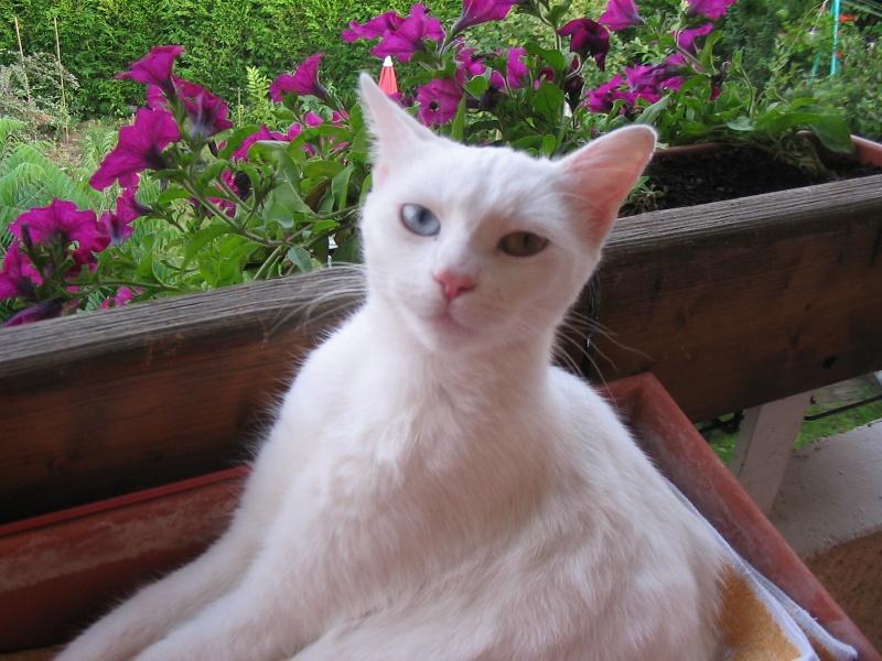 Photos chatons sur mon balcon - Page 2 Img_4612