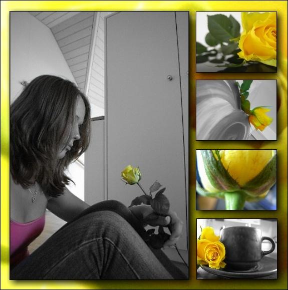 Rosen-Collage Rose110