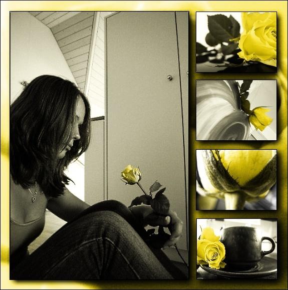 Rosen-Collage Rose211