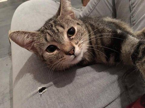 Le noël 2019 des Handi'Cats Crevet10