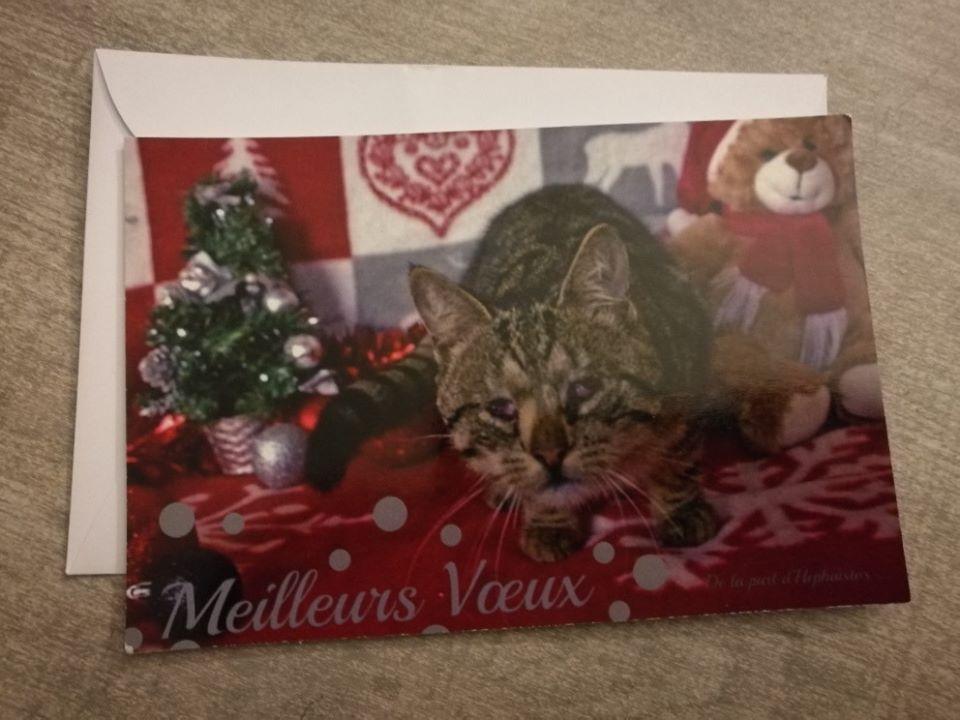 Cartes de voeux Handi'Cats  Hepha10