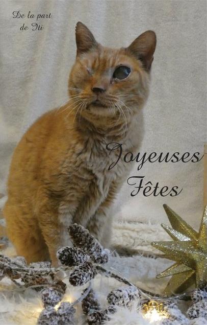 Cartes de voeux Handi'Cats  Iti10