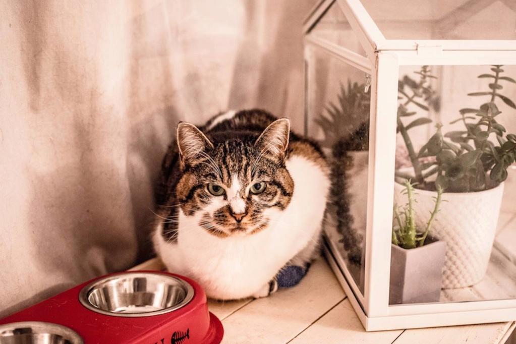 Le noël 2019 des Handi'Cats Lollip11