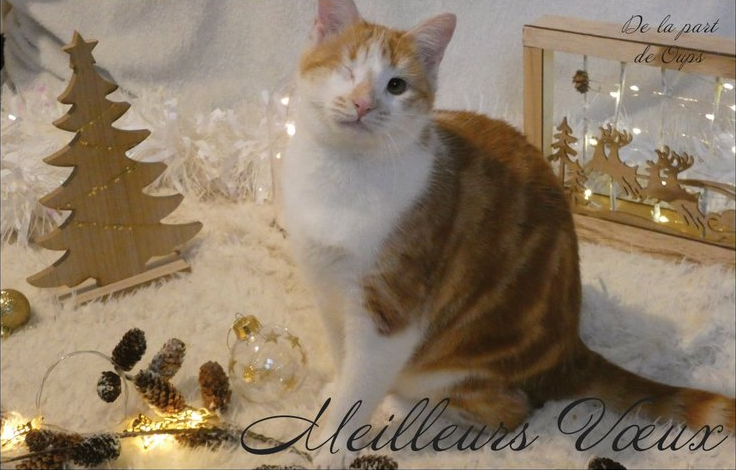 Cartes de voeux Handi'Cats  Oups10