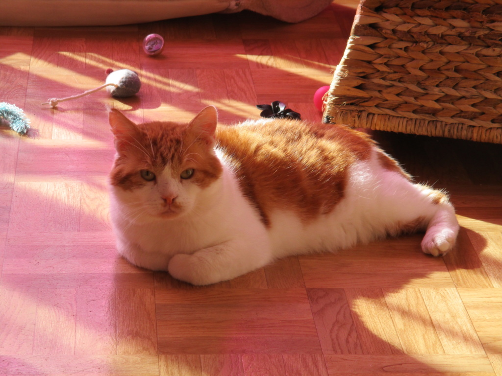Le noël 2019 des Handi'Cats Potiro10