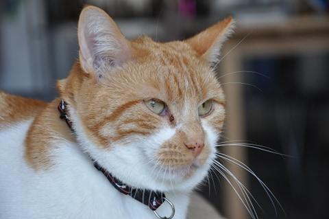 Le noël 2020 des Handi'Cats Saphir11