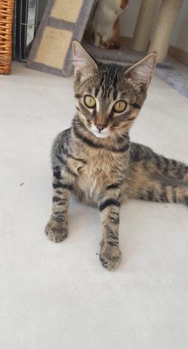 Le noël 2019 des Handi'Cats Sashim10
