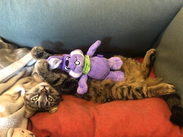 Le noël 2020 des Handi'Cats Sashim11