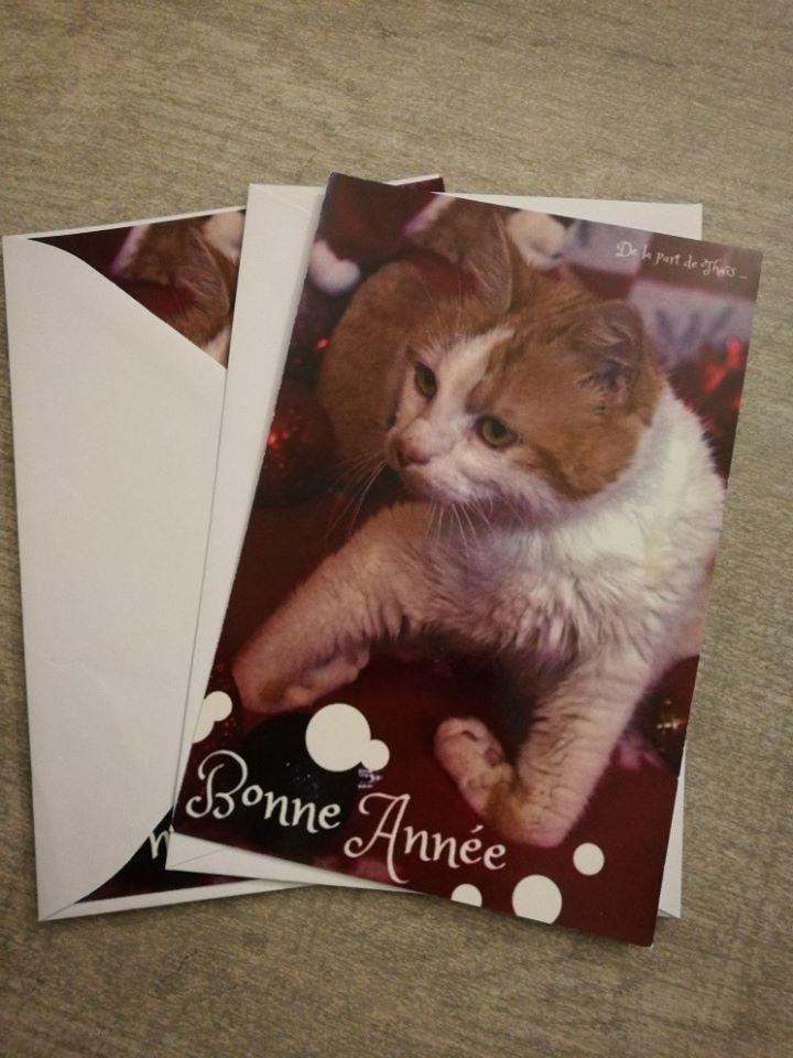 Cartes de voeux Handi'Cats  Thais210