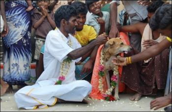 Indian man marries a dog Aleqm510