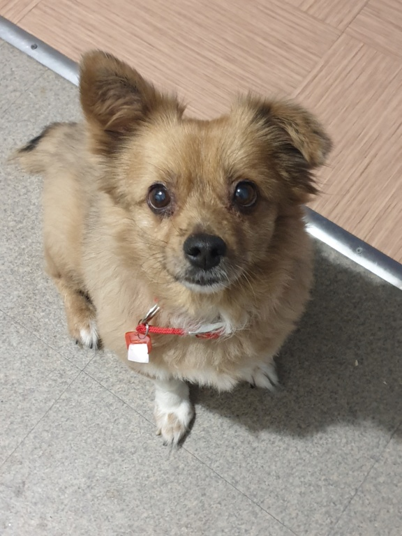 ELLA - Femelle croisée Pékinois de petite taille (10 kg) - née en juillet 2009 - adoptée par Nathalie (60)  20191128