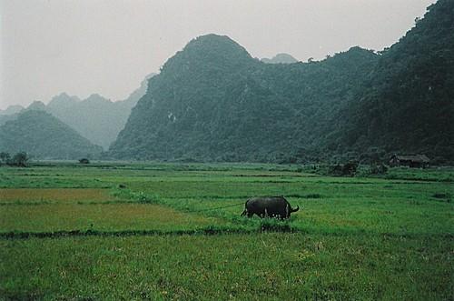 Baie d'Halong au Viet nam Rural-10