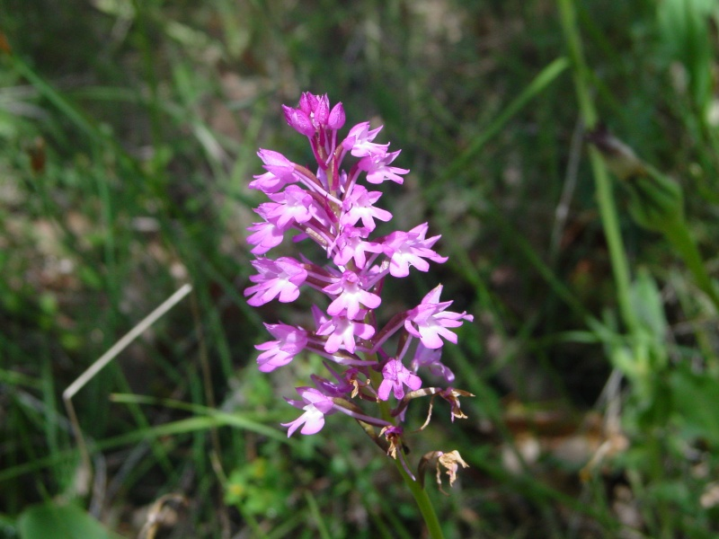 Flors a la Ruta Calders-l'Estany-Moià-Calders Abelle10