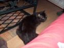 je vous présente mon chat Billy - Page 7 S6300210