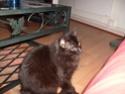 je vous présente mon chat Billy - Page 7 S6300211