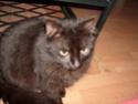 je vous présente mon chat Billy - Page 7 S6300212