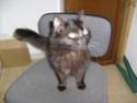 je vous présente mon chat Billy - Page 7 S6300213