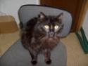 je vous présente mon chat Billy - Page 7 S6300214
