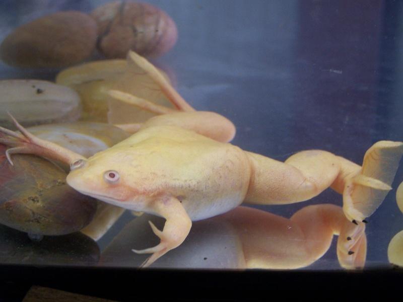 Mes Axolotl mais c'est quoi donc? 100_2011