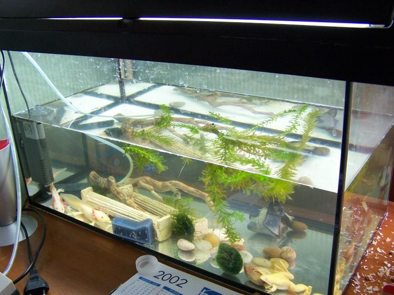 Mes Axolotl mais c'est quoi donc? 100_2012