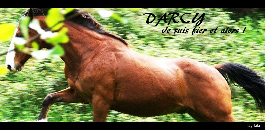 Darcy [ Étalon Sauvage ] 7pk2op11