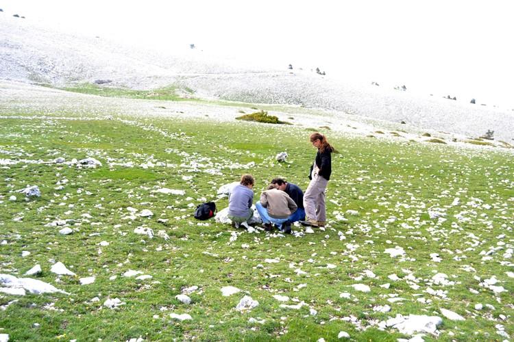 Davarrée au Mont Ventoux 1411