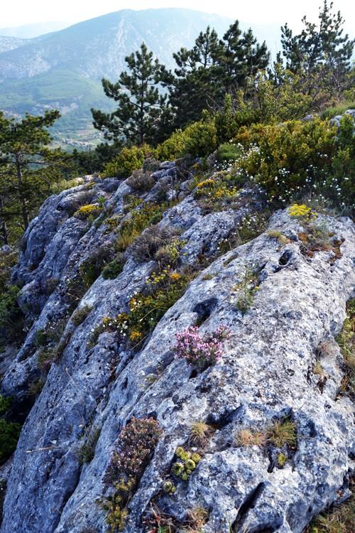 Davarrée au Mont Ventoux 218