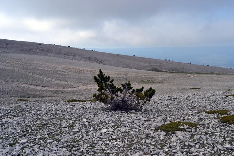 Davarrée au Mont Ventoux 2510