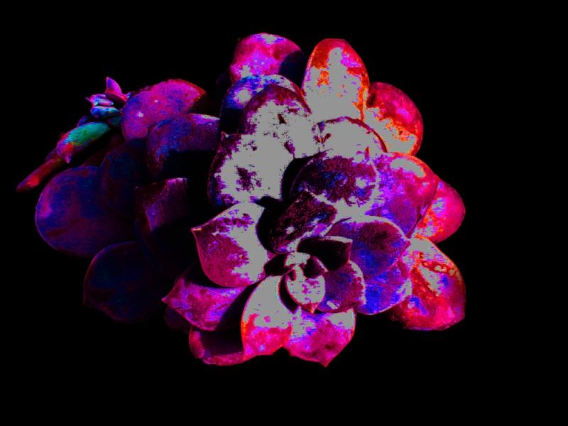 Floraison de fin d'estive - début d'hivers Dsc04410
