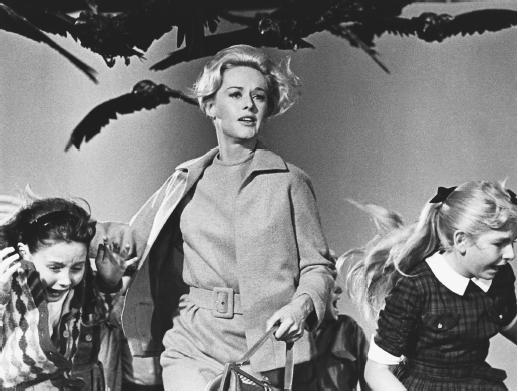Les Oiseaux (la nouvelle, et le film).  Birdse10