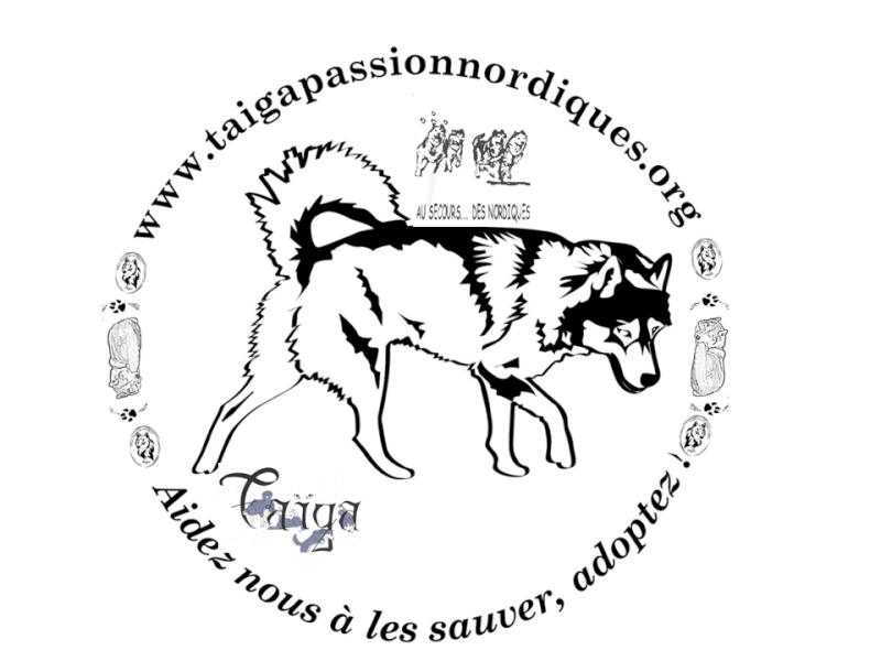 Vote : LOGO T-SHIRT TAIGA  -Cloture le 19 juin minuit-  Prasen22