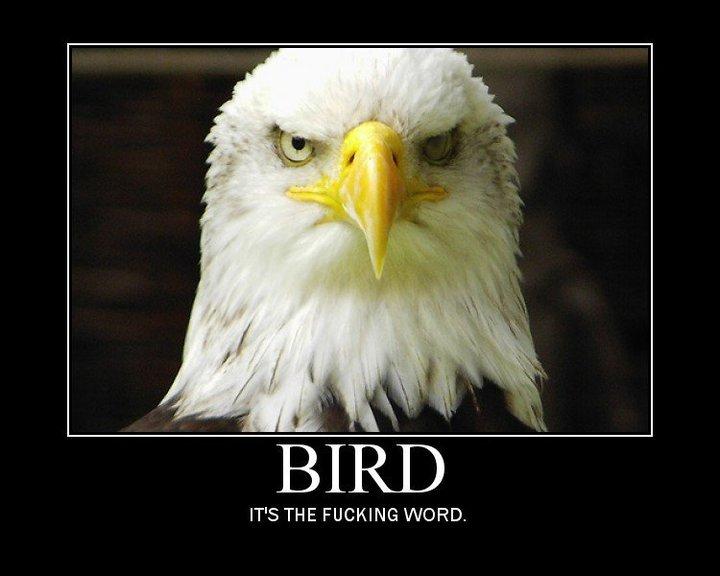 lolcats/image macros thread Bird_i10