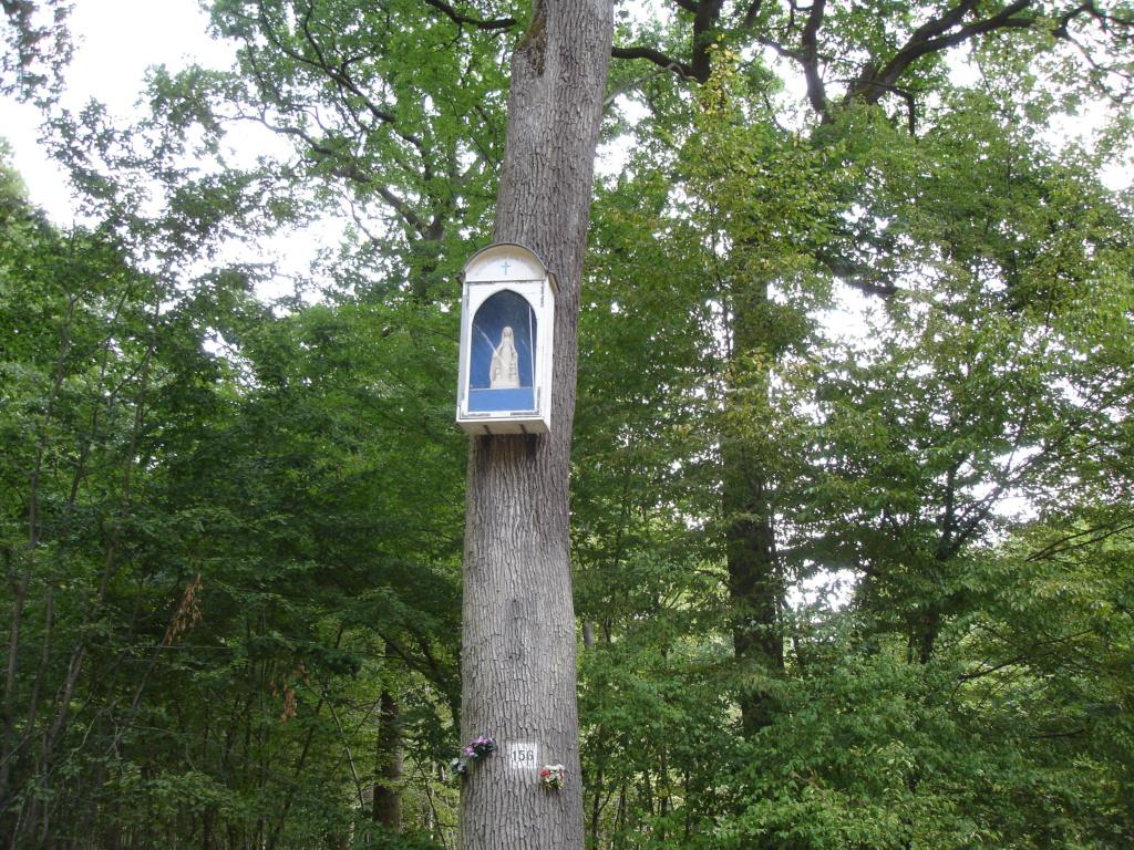 Forêt de St Germain en Laye (sur une idée d'Alexandre) Dsc00011