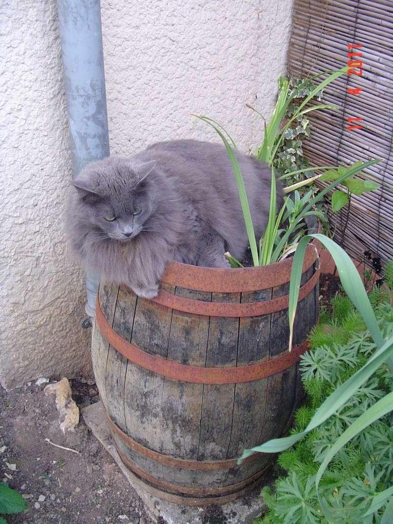 bébé chat ...........de canaille & chabal ! - Page 10 Finett10