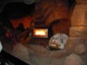 [Walt Disney World Resort] Mon Fabuleux voyage (13-31 Octobre 2010) Wdw_jo81