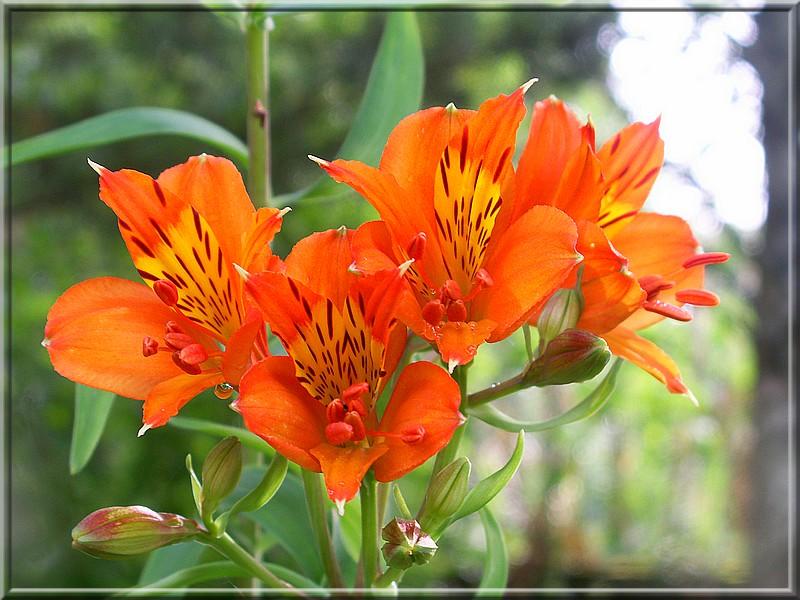 Toutlejardin, un forum de jardinage, de joie et de bonne humeur