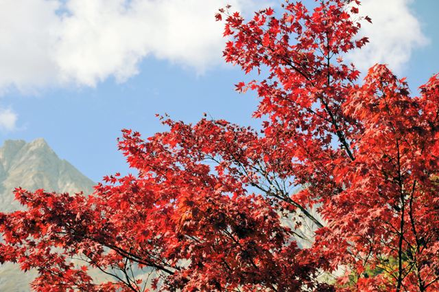 Fotoprojekt - Bäume - Seite 6 Herbst10