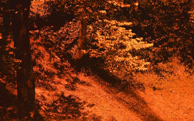 Fotoprojekt - Bäume - Seite 6 Wald_i10