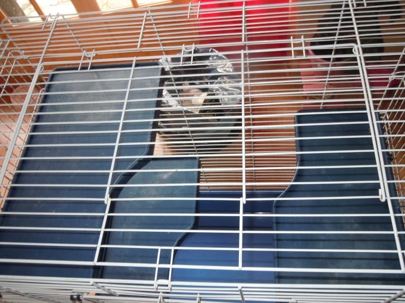 vends grande cage pour chinchillas,furet ou gros ratoux (78) Dscn0922