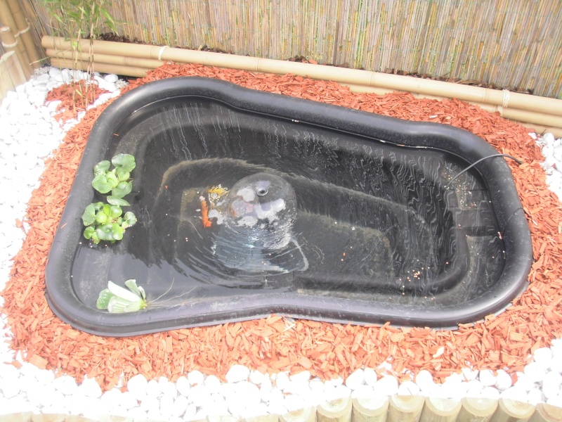 mon premier bassin P4290112