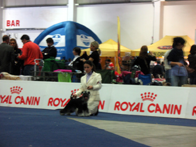 INTERNATIONAL DOG SHOW Result from Italy Immagi32