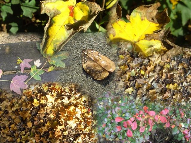 concours photo du mois d'octobre 2010. Thème : Fleurs ou feuilles séchées Feuill10