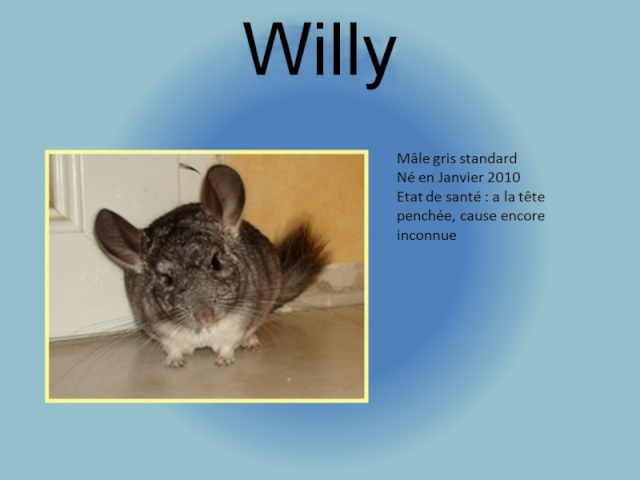 WILLY  victime d'AVC . ( Adopte ! ) Willy10