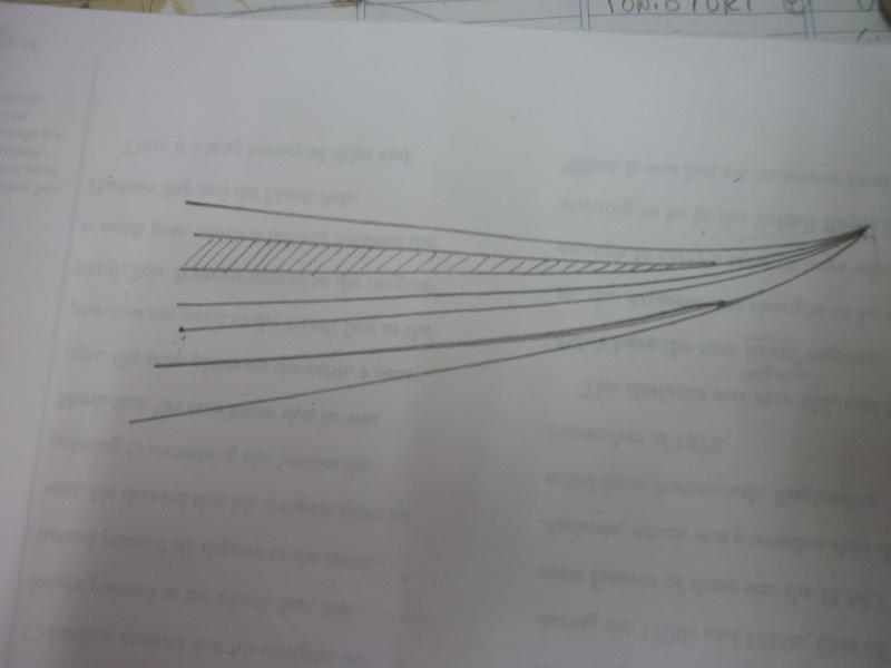 Palellatura  P1030929