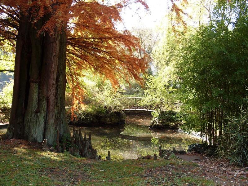 Petite promenade au jardin botanique de Montigny-lès-Metz Sdc10511