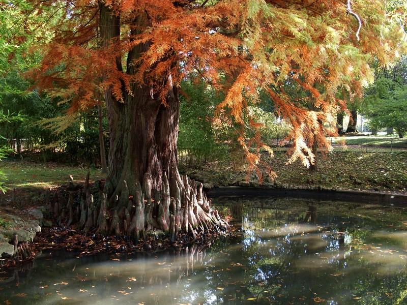 Petite promenade au jardin botanique de Montigny-lès-Metz Sdc10512