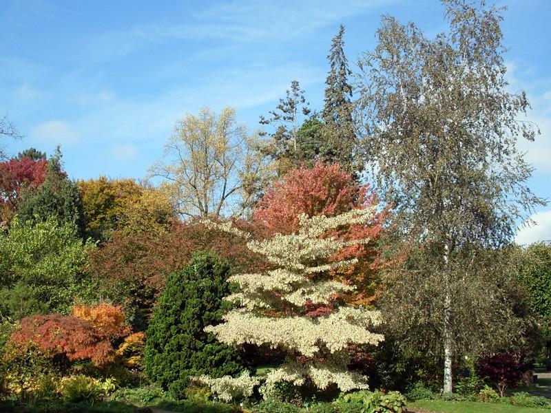 Petite promenade au jardin botanique de Montigny-lès-Metz Sdc10513