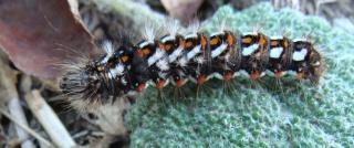 Les chenilles deviendront des papillons ... D80410